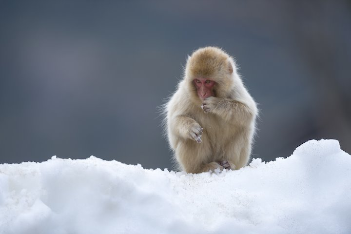 Visit the Snow Monkeys - Activities